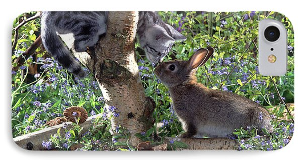 Silver Tabby And Wild Rabbit IPhone Case by Jane Burton