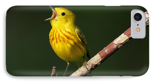 Singing Yellow Warbler IPhone Case by Doug Lloyd