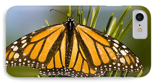Single Monarch Butterfly IPhone Case by Darcy Michaelchuk