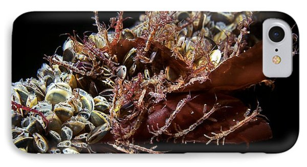 Skeleton Shrimp And Mussels Phone Case by Alexander Semenov