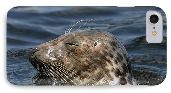 IPhone Case featuring the photograph Sleepy Seal by Rick Frost