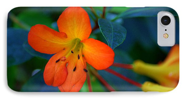 IPhone Case featuring the photograph Small Orange Flower by Tikvah's Hope
