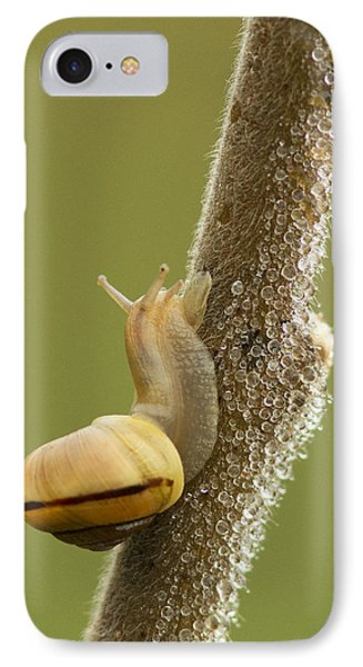 Snail In Dew Phone Case by Mircea Costina Photography