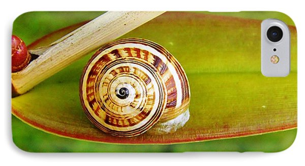 IPhone Case featuring the photograph Snail On Leaf by Werner Lehmann