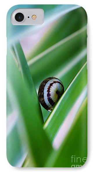 IPhone Case featuring the photograph Snail On Yuca Leaf by Werner Lehmann
