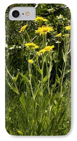 Sneezeweed (dugaldia Hoopesii) IPhone Case by Bob Gibbons
