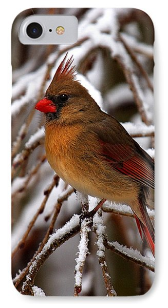 IPhone Case featuring the photograph Snowbirds--cardinal Dsb025 by Gerry Gantt