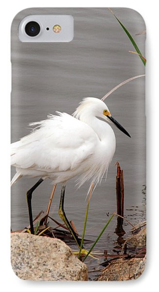 Snowy Egret IPhone Case by Kay Lovingood