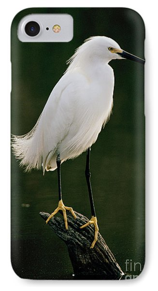 IPhone Case featuring the photograph Snowy Egret Portrait by Doug Herr