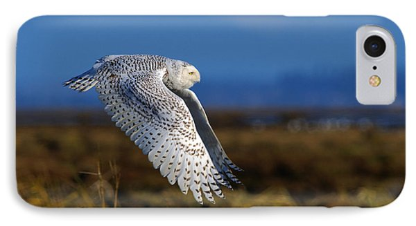 Snowy Owl 1b IPhone Case by Sharon Talson