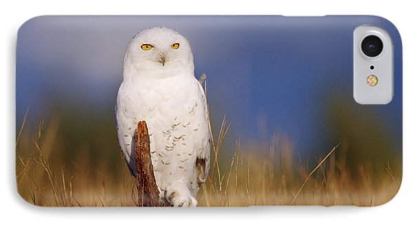 Snowy Owl Adult Perching On A Low Stump IPhone Case