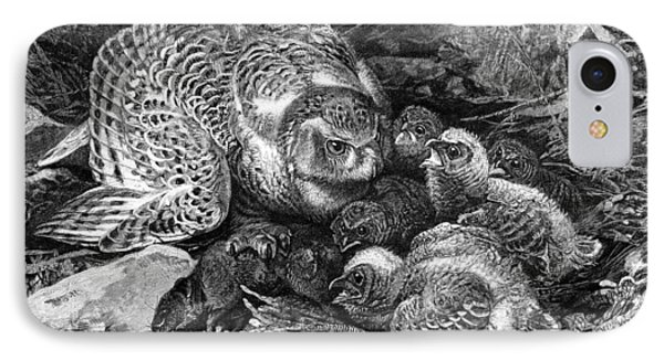 Snowy Owl And Chicks, 19th Century IPhone Case by