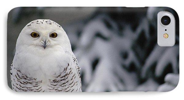 Snowy Owl Nyctea Scandiaca Camouflaged IPhone Case