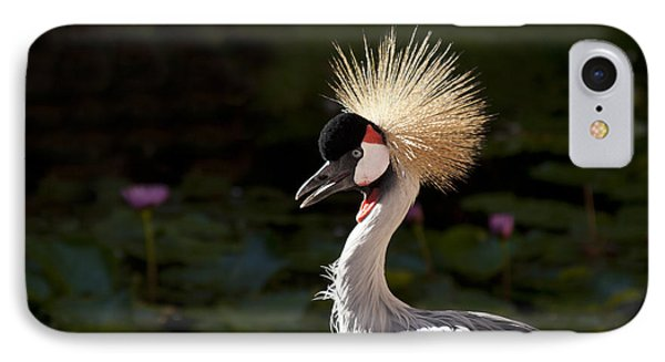 South African Grey Crowned Crane Phone Case by Sharon Mau