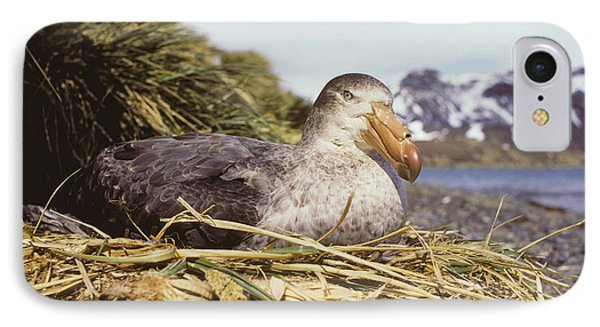 Southern Giant Petrel Phone Case by Peter Scoones