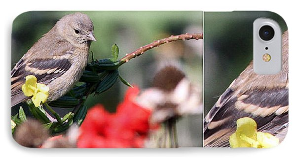 IPhone Case featuring the photograph Sparrow With Detail by Mark J Seefeldt