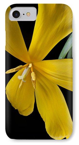 Spent Tulip Phone Case by Garry Gay