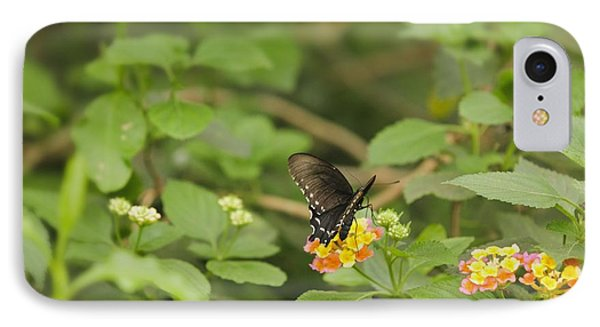 Spicebush Swallowtail Butterfly On Lantana Shrub Verbena IPhone Case by Marianne Campolongo