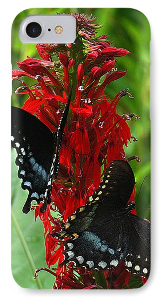 Spicebush Swallowtails Visiting Cardinal Lobelia Din041 IPhone Case by Gerry Gantt