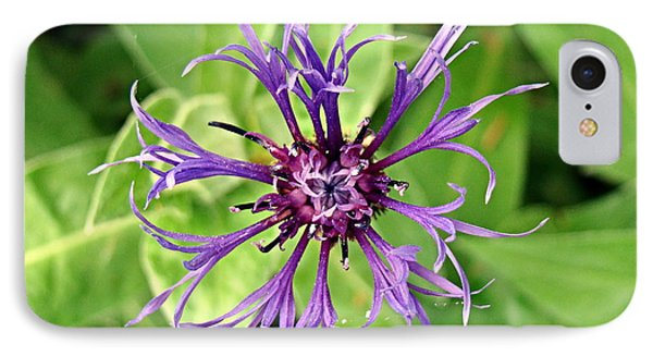 IPhone Case featuring the photograph Spider Flower by Nick Kloepping