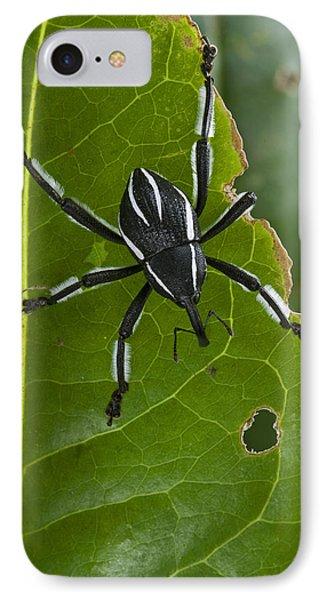 Spider Weevil Papua New Guinea Phone Case by Piotr Naskrecki