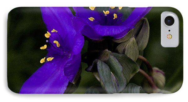 Spiderwort Lovers Phone Case by Michael Friedman