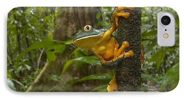 Splendid Leaf Frog  Costa Rica Phone Case by Piotr Naskrecki