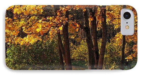 Splendor Of Autumn. Maples In Golden Dresses Phone Case by Jenny Rainbow