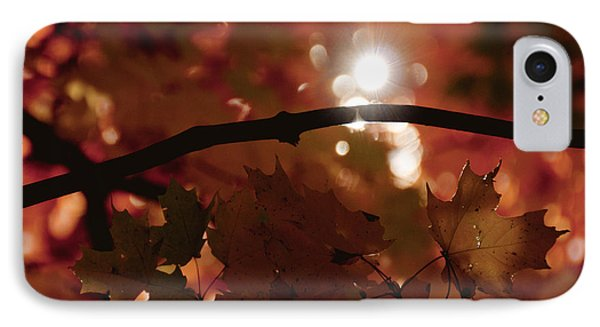 Spotlight On Fall IPhone Case by Cheryl Baxter