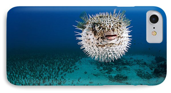 Spotted Porcupinefish II IPhone Case