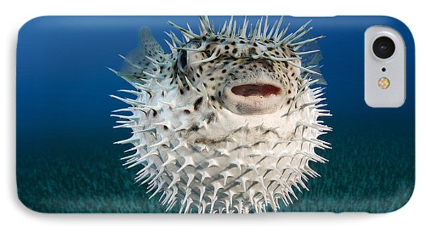Spotted Porcupinefish IIi IPhone Case