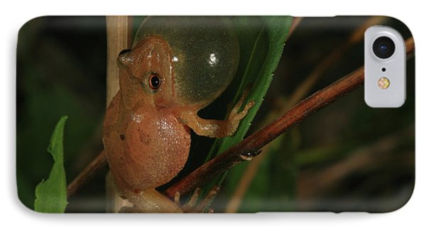 Spring Peeper IPhone Case by Bruce J Robinson