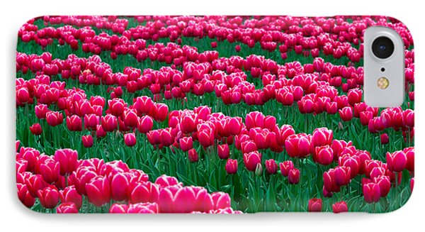 Spring Tulips Phone Case by David R Frazier and Photo Researchers