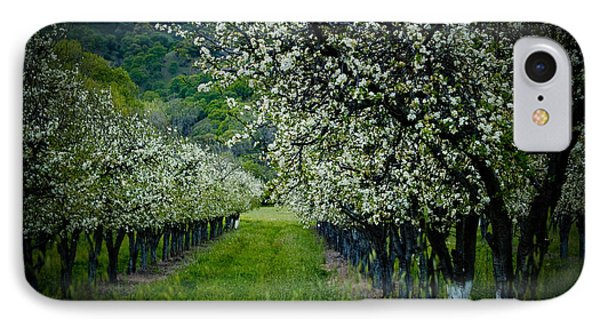 Springtime In The Orchard II Phone Case by Bill Gallagher