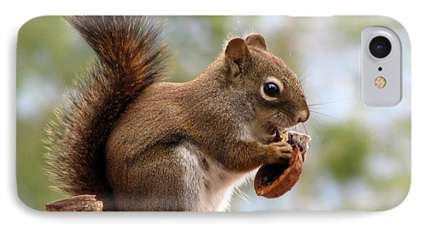 Squirrel And His Walnut IPhone Case by Leone Lund