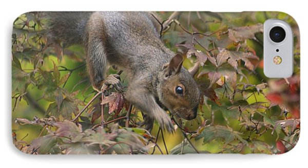 Squirrel In Fall Phone Case by Valia Bradshaw
