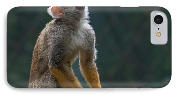Squirrel Monkey IPhone Case by Cindy Haggerty