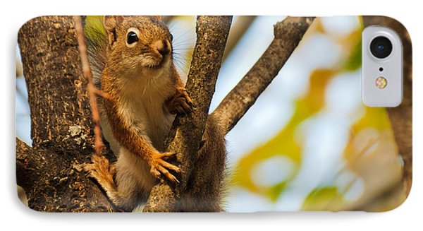 Squirrel On High IPhone Case by Cheryl Baxter