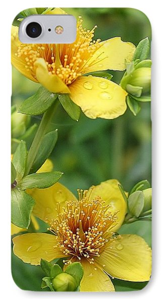 St John's-wort IPhone Case by Bruce Bley
