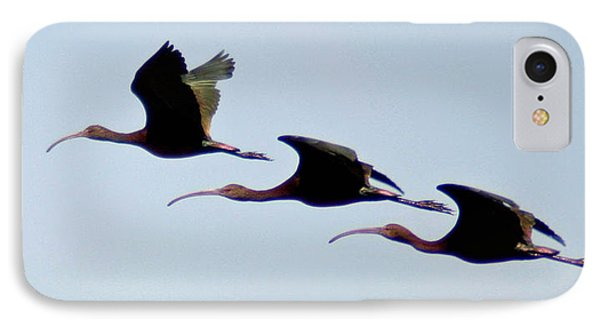 IPhone Case featuring the photograph Stacked Ibis by Mitch Shindelbower