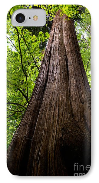 Stanley Park Trees 6 Phone Case by Terry Elniski