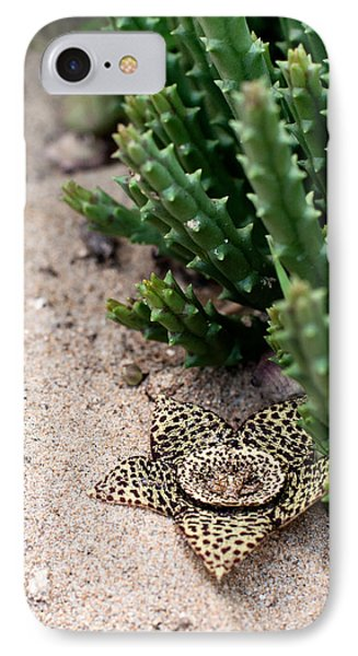 IPhone Case featuring the photograph Stapelia Variegata by Laura Melis