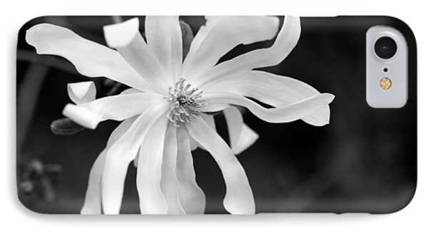 Star Magnolia IPhone Case by Lisa Phillips