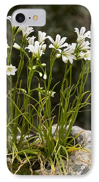 Star-of-bethlehem (gagea Graeca) Phone Case by Bob Gibbons