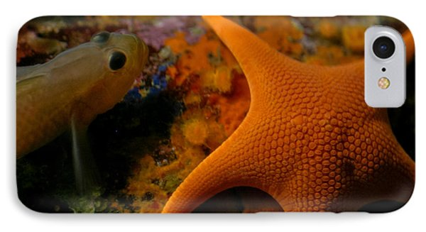 Starfish And Friend Phone Case by Mitch Shindelbower