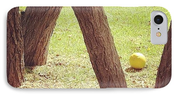#stilllife #still #life #nature #orange IPhone Case by Anna Valencia
