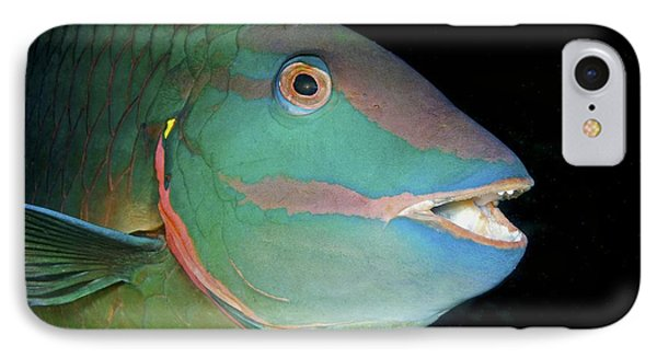 Stoplight Parrotfish Phone Case by Clay Coleman