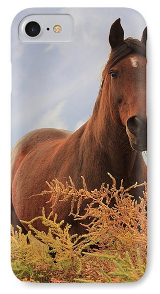 Stormy IPhone Case by Jim Sauchyn