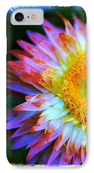Strawflower IPhone Case by Judi Bagwell