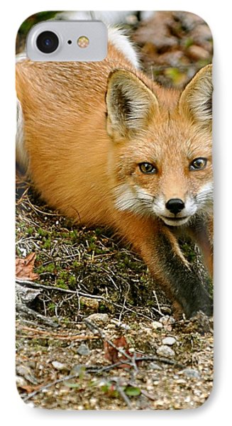 IPhone Case featuring the photograph Stretching Fox by Rick Frost